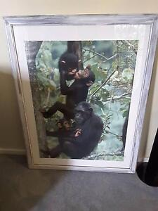 Jane goodall chimpanzees framed picture O'Sullivan Beach Morphett Vale Area Preview