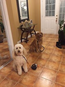 DOG BOARDING/SITTING 25% OFF FOR FIRST TIME CLIENTS