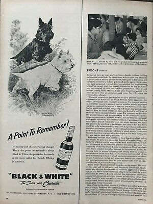 Black~&~White~Scotch~With~Character~Scottie~Westie~1957 Vintage Print AD A36