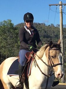 RAIN - PINTO/Quarter/Stock Horse Camden Camden Area Preview