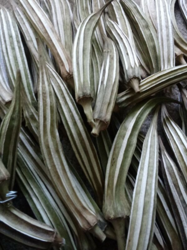5 Hand dried Okra Pods per order-Untreated for Arts and Crafts Good Quality