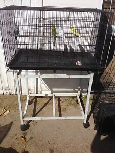 Baby budgies, flight cage and stand East Maitland Maitland Area Preview
