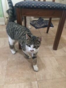FOUND- Young cat / kitten