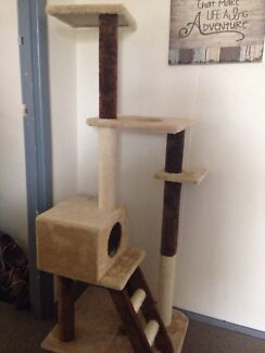 Cat stand  Corio Geelong City Preview