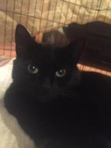 Beautiful black young adult looking for indoor home Taylors Lakes Brimbank Area Preview