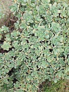 HUGE ESTABLISHED PLANTS