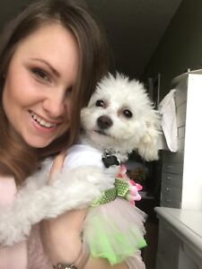 House and Pet Sitting Services