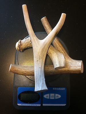 1 pound of Medium/Large Deer Whole Antler Dog Chew Mix-All Natural-Great Buy (Buy Deer Antlers)
