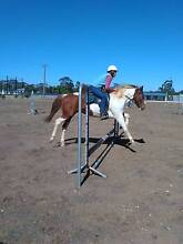 Paint X ,horse, Mare  appx 14.3hnds 6 yrs Raywood Loddon Area Preview