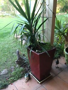 4 large  red ceramic pots with plants Morayfield Caboolture Area Preview
