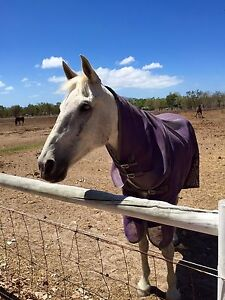Warmblood Gelding Horse Nome Townsville Surrounds Preview