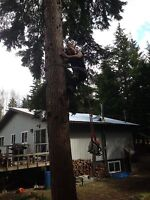 Residential tree falling and shrub removal