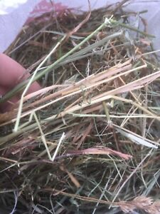 Hannah's Hay (for small animals)