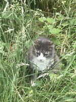 Found cat on first lake trail in Lower Sackville