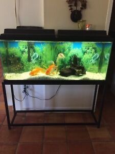 55 gal tank with fish