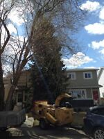 Tree Removal Services/26 Years Experience/Spring Discounts
