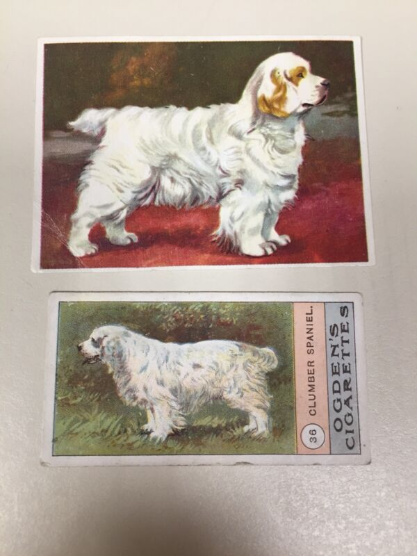 Clumber Spaniel Cigarette Cards Set of 2