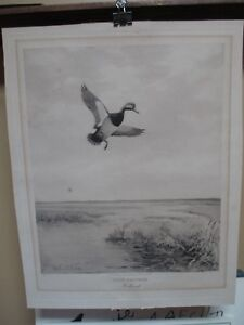 Roland Clark Etching by Derrydale Titled Calm Weather Redhead