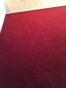 BURGUNDY PLUSH CARPET Enfield Burwood Area Preview