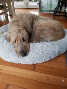 Plush Pet Calming Bed Round Nest Cosy Dog Cat Mattress Faux Fur Grey S