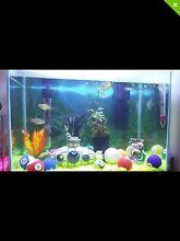 Fish for sale - 3x Angel Fish, 4x platies Wattle Grove Kalamunda Area Preview