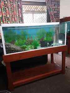 4 Ft fish tank Carina Brisbane South East Preview