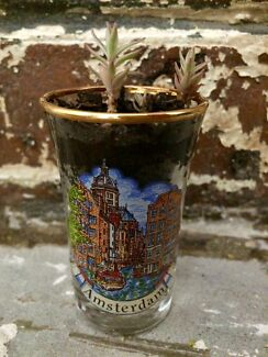Shot Glass Succulent
