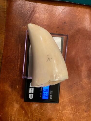 Finland Antique SCRIMSHAW  WHALE TOOTH, FAUX 193 Grams