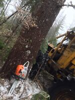 Land clearing ,tree cutting