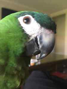 I WILL REHOME YOUR UNWANTED BIRDS Thomastown Whittlesea Area Preview