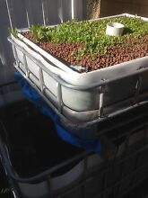 Aquaponics IBC fully set up ready to go East Victoria Park Victoria Park Area Preview