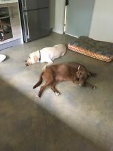 Holiday and weekend yard required for 2 dogs Blairgowrie Area Blairgowrie Mornington Peninsula Preview