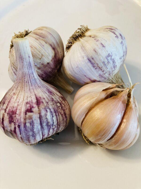 Spanish Roja Garlic Bulbs - Organic Grown