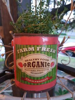 Thyme In A Farm Fresh Pot
