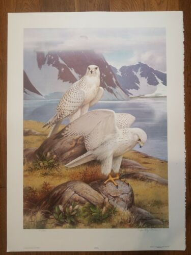 1979 Roger Tory Peterson Gyrfalcon Limited Edition Print HS - $30.00