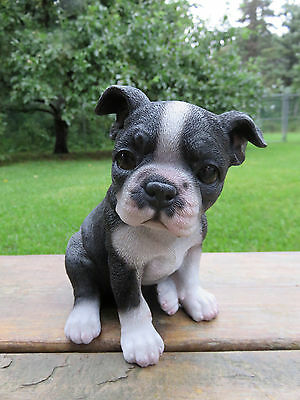 (BOSTON TERRIER PUPPY DOG FIGURINE resin animal Statue PET SITTING  ORNAMENT NEW)