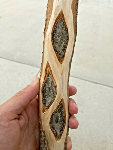 "61"" Diamond Willow Walking Stick (SPALTED 💎 WOOD) Trekking, Cane CARVING blank"