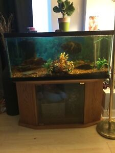 40 gallon fish tank with everything included