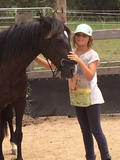 Children and adults riding lessons
