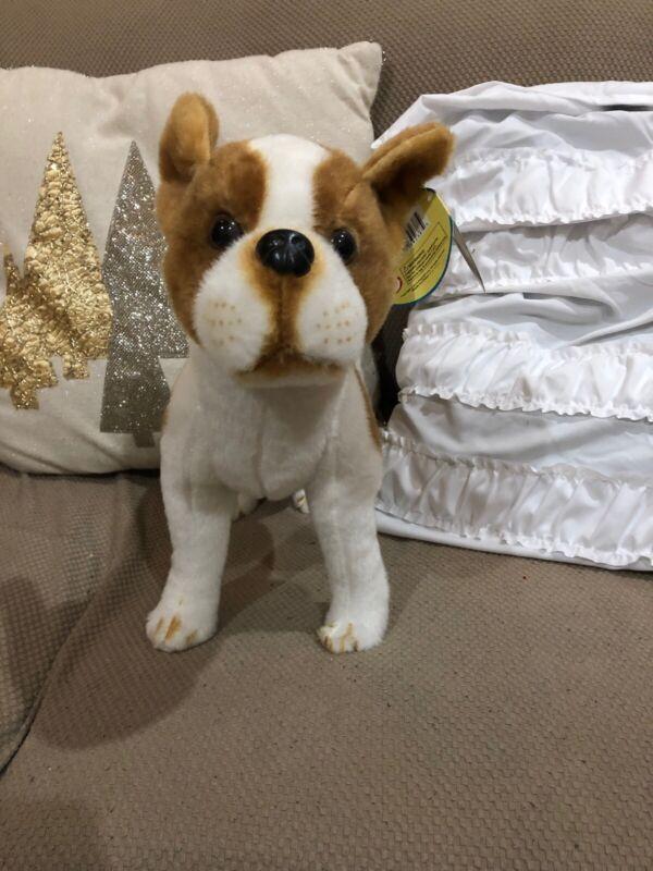 Bobby Boston Terrier