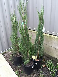 Trees for sale Cranbourne East Casey Area Preview