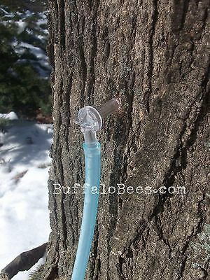 6 Maple Tapsspiles 24 Hose 516 Tree Saver Sap Syrup Free Ship. To Canada