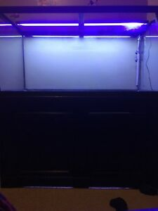 Fish tank setup for sale or trade