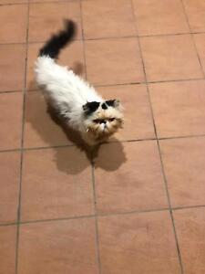 Persian pure breed cat msle judt over s year old need a good home