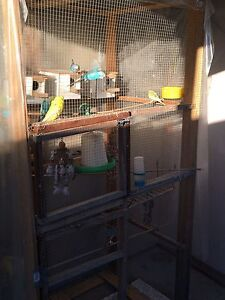 16 budgies and big cage Chester Hill Bankstown Area Preview