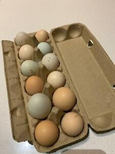 Fertile eggs- mixed bag of great breeds