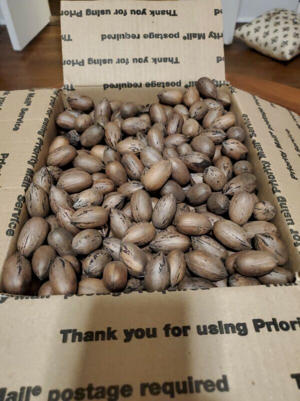 9+ lbs. Fresh Georgia Pecans In-Shell 2020 Crop Delivered to You!
