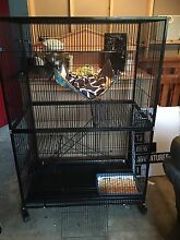 Large cat cage Launceston Launceston Area Preview