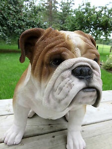 english bulldog figurine english bulldog statue ebay 2626