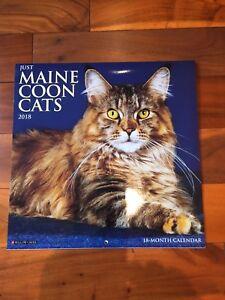 Maine Coon Cats Calendar
